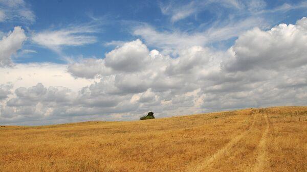Засохшая трава на пастбище