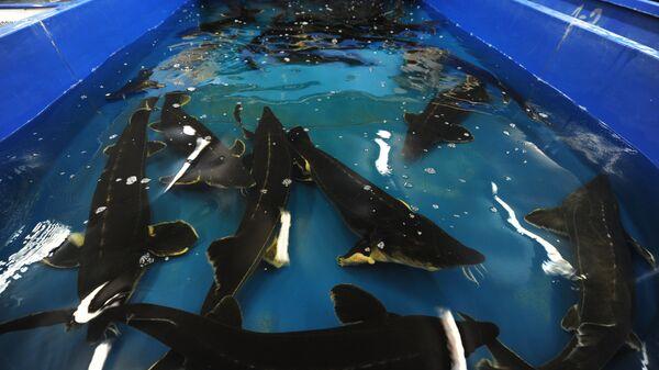 Комплекс рыбоводства и аквакультуры