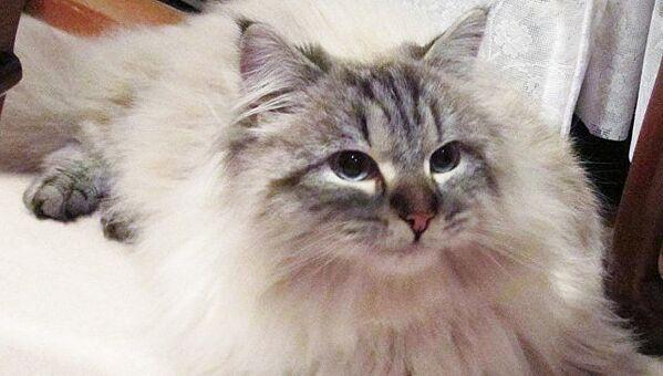 Кот, подаренный Владимиром Путиным японскому губернатору
