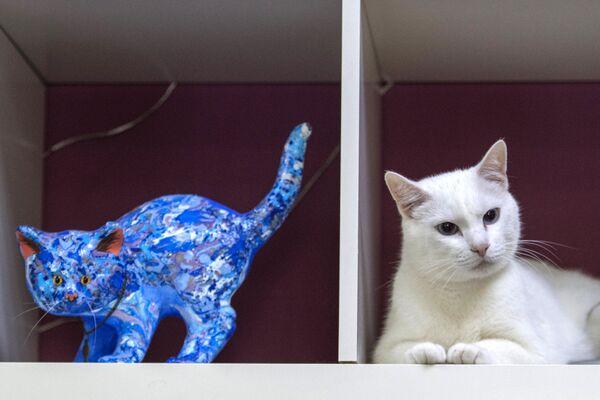 Эрмитажный кот-оракул Ахилл