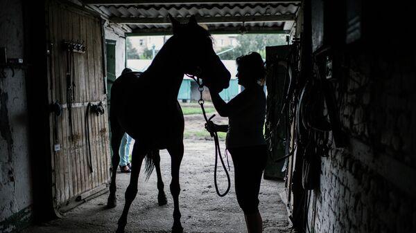 Лошадь в конюшне перед началом конно-спортивных соревнований Большой Сибирский круг в Омске