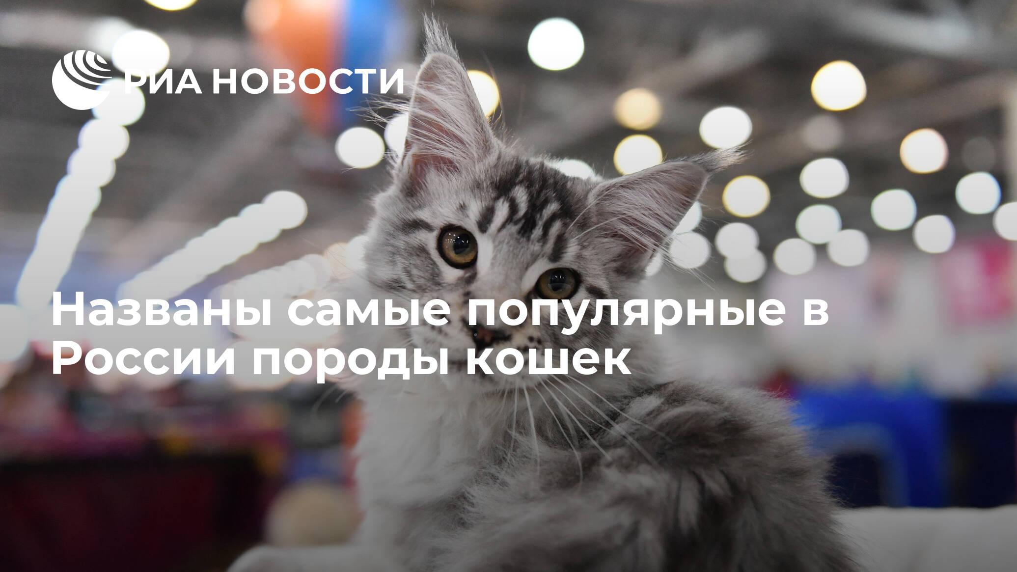 коронавирус у кошек последствия